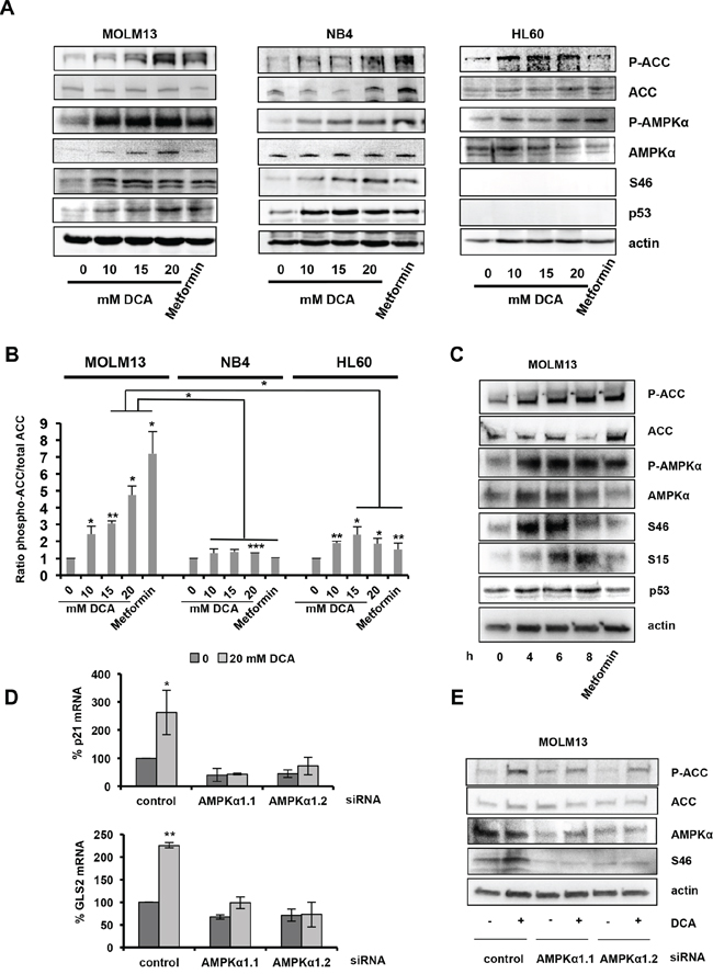 DCA-mediated activation of the AMPK pathway is required for p53 induction.