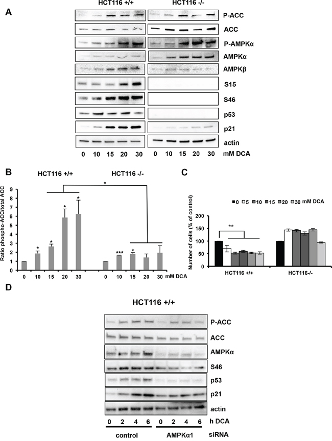 Activation of the AMPK/p53 pathway by DCA in HCT116 cells.