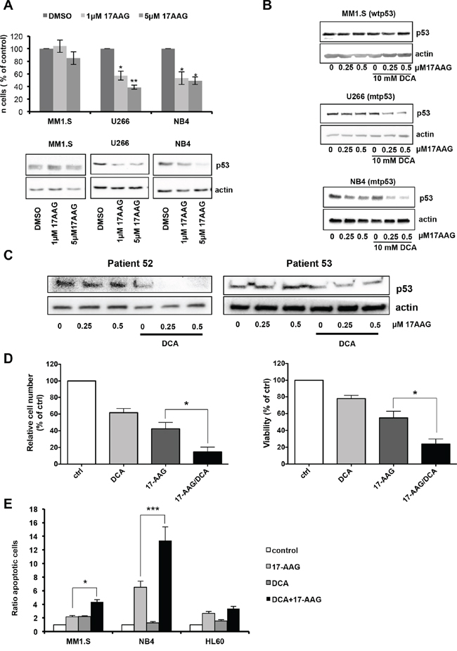 DCA and 17-AAG synergize to induce apoptosis in mutant p53 tumor cells.