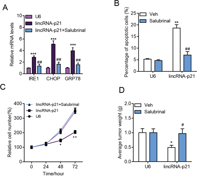 Inhibition of ER stress blocks lincRNA-p21 functions in hepatocarcinoma.
