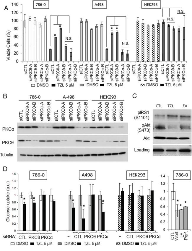 Tonantzitlolone effect is PKCθ-dependent.