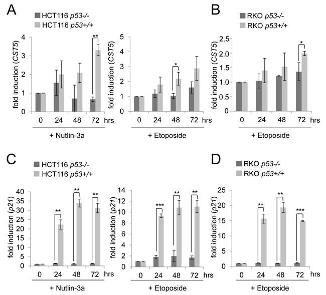 p53-dependent regulation of