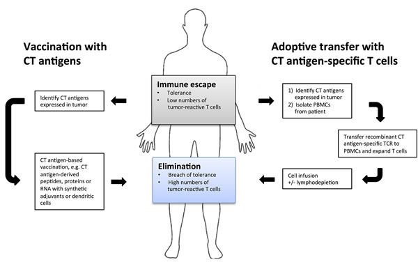 Cancer immunotherapies targeting cancer/testis antigens.