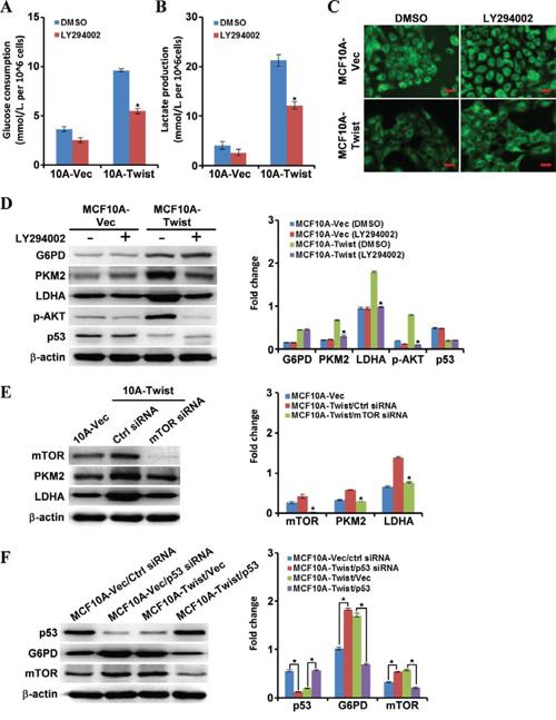 Molecular mechanisms underlying cell energy metabolism reprogramming in MCF10A-Twist cells.