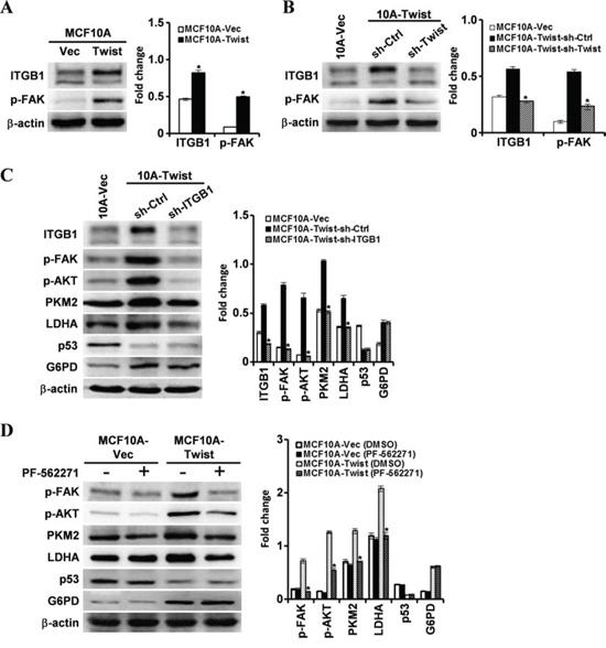 Twist activates the FAK pathway and its downstream PI3K/AKT through upregulating β1-integrin.