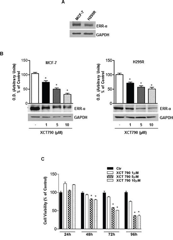 ERRα inverse agonist XCT790 decreases ERRα protein content and H295R cells growth in vitro.