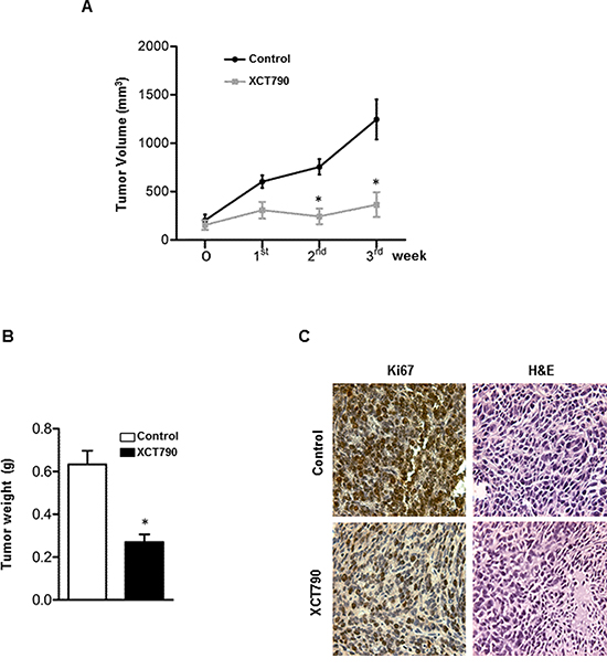 ERRα inverse agonist XCT790 decreases H295R cells proliferation in vivo.