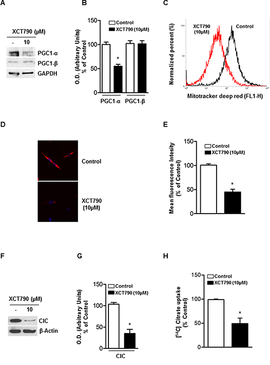 XCT-790 decreases mitochondrial mass and function in H295R cells.