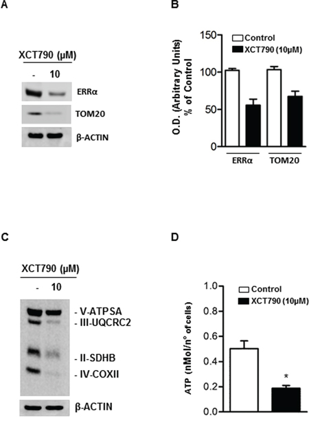 XCT790 decreased OXPHOS protein content and ATP concentration in H295R cells.