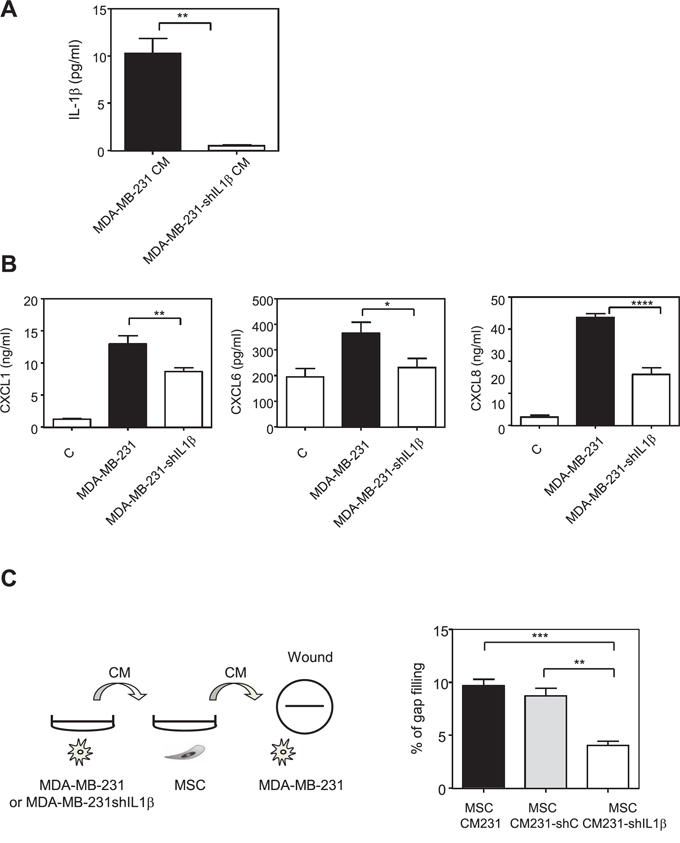 Inhibition of IL-1β production by MDA-MB-231 cells reduces the production of chemokines by MSCs in the presence of MDA-MB-231 conditioned medium.