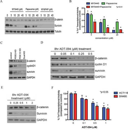 Inhibition of PDE5 and 10 by specific inhibitors or ADT-094 can attenuate β-catenin signaling.