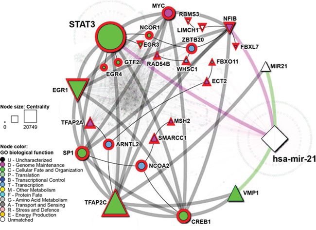 Network of STAT3 and hsa-mir-21 regulatory targets.