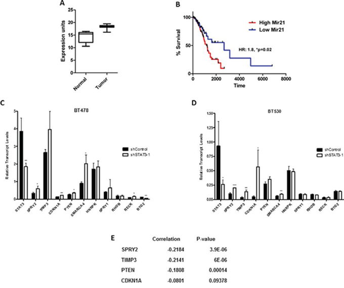 miR-21 expression in lung adenocarcinoma patients and its association with STAT3.