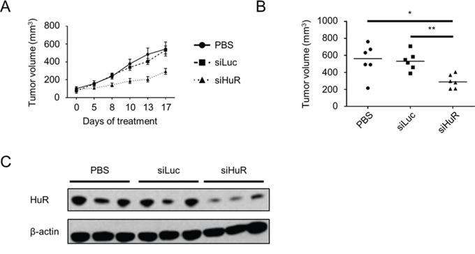 Lipidoid-delivered HuR siRNA suppresses established PDA xenograft growth.