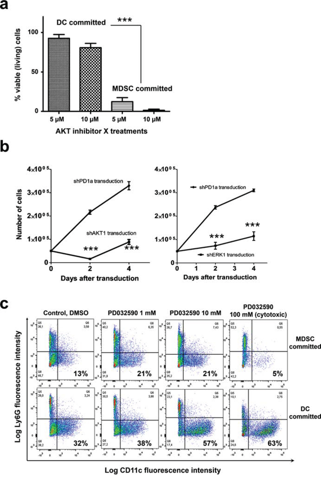 AKT is required for survival of myeloid cells committed to MDSC differentiation, while inhibition of the ERK pathway enhances conventional DC differentiation.