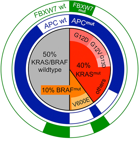 Mutational spectra of KRAS, BRAF and the Wnt effector genes APC and FBXW7 in CRC.