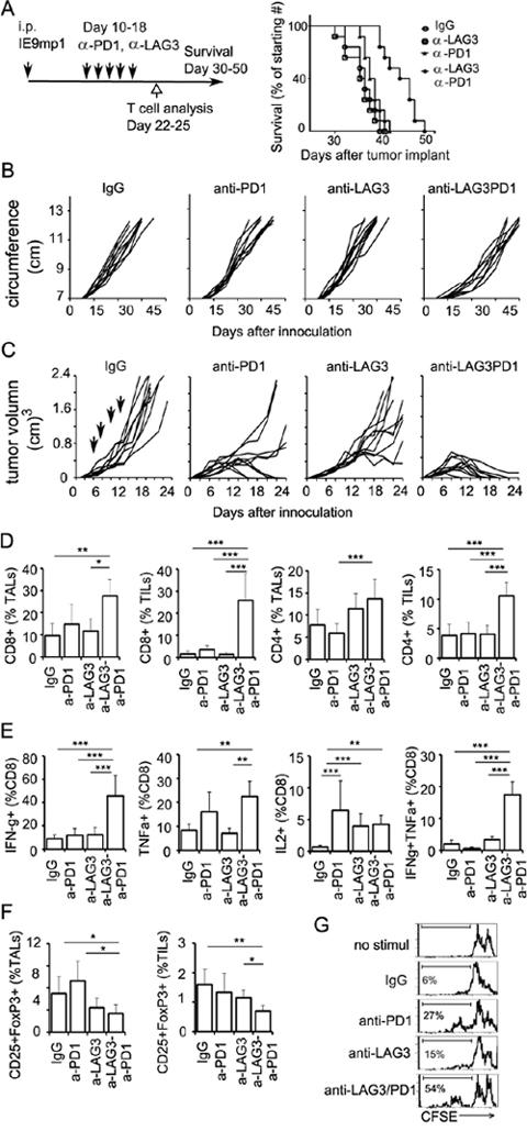 Dual blockade of LAG3 and PD1 synergistically enhance anti-tumor immunity.