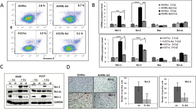IL-6 protected A549 and H157 cells from apoptotic death after cisplatin treatment via up regulation of Bcl-2 and Mcl-1.