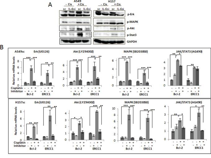Activation of IL-6 downstream signaling pathways on cisplatin treatment.