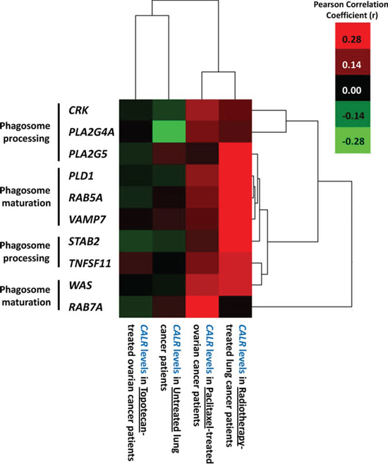 Overall tumoural CALR levels positively correlate with expression levels of phagocytosis-related genes only in cancer patients treated with ICD-inducing therapies.