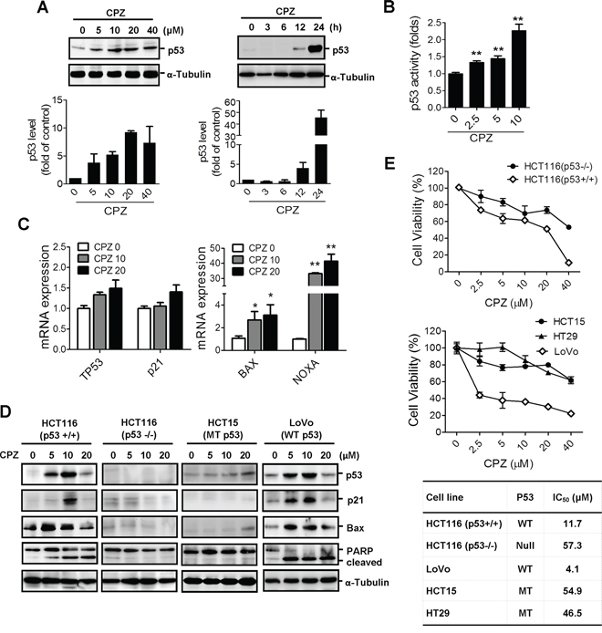 Induction of p53-dependent apoptosis in human CRC cells by CPZ.