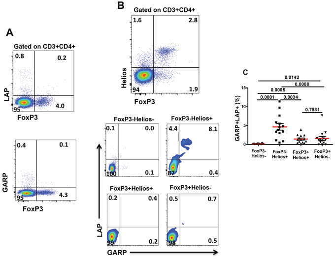 Expression of GARP and LAP on different FoxP3+/–Helios+/− non-activated T-cell subsets.