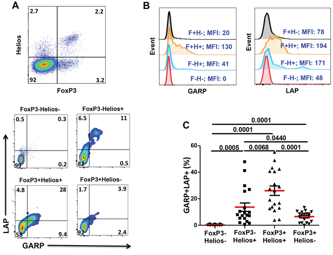 Expression of GARP and LAP on different FoxP3+/–Helios+/− T-cell subsets in the activated setting.