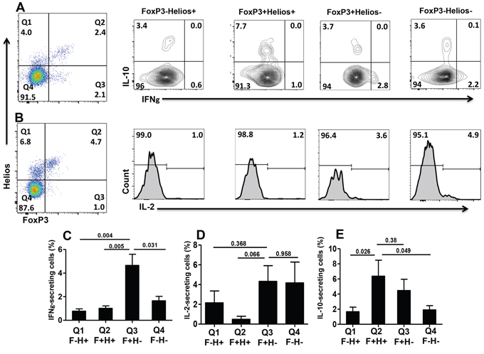 Intracellular cytokine secretion from different FoxP3+/–Helios+/− T-cell subsets.