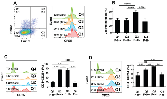 CFSE-based proliferation assays and CD25 expression within different FoxP3+/–Helios+/− T-cell subsets.