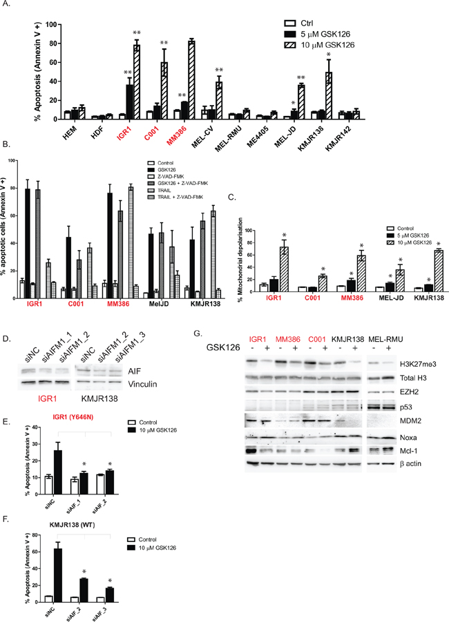 GSK126 induces apoptosis in a caspase independent manner, involves mitochondrial depolarization and AIFM1 release.