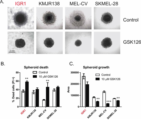GSK126 inhibits the growth of melanoma spheroids growing in 3D culture.