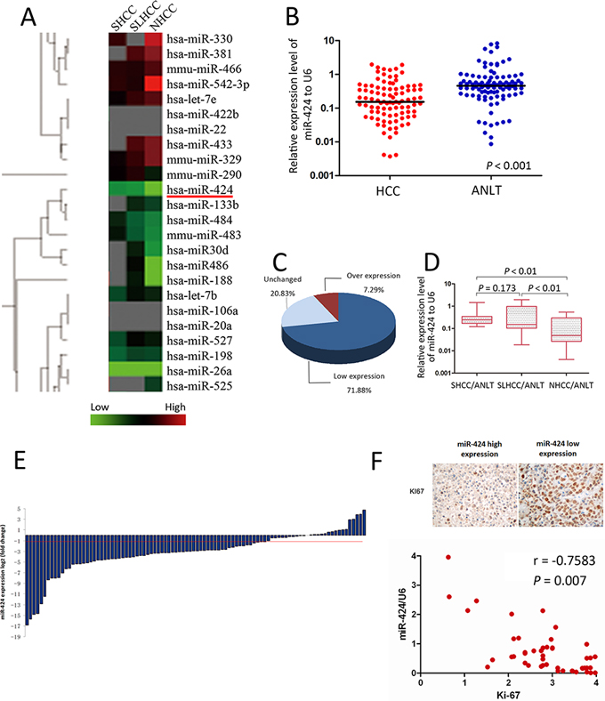 miR-424 is frequently down-regulated in HCC and its expression level is inversely correlated with Ki-67.