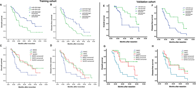 Survival relevance analysis of miR-424 expression in two HCC patients cohorts (A–D: Training cohort, E–H: Validation cohort).