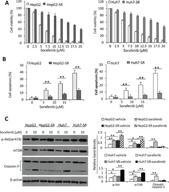 Oncotarget | MiR-21 mediates sorafenib resistance of