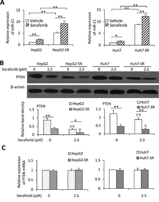 Exposure to sorafenib induces upregulation of miR-21 and downregulation of PTEN.