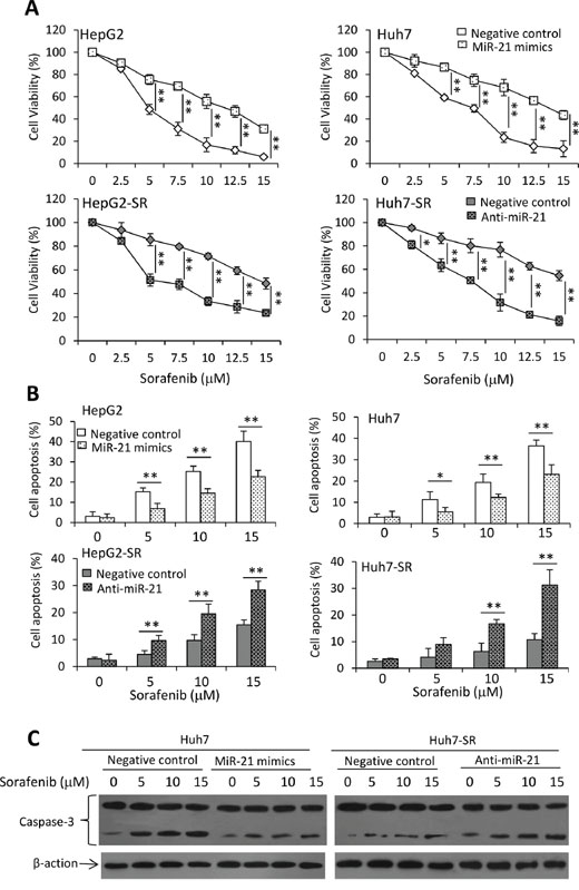 MiR-21 affects sorafenib-induced cell growth inhibition and apoptosis.
