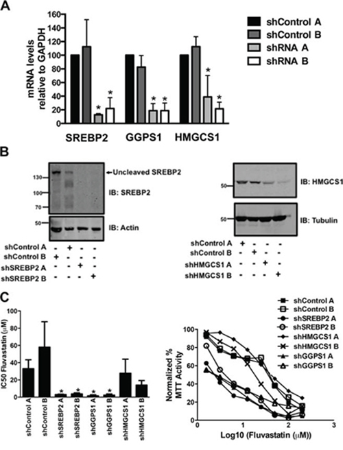 Generation of A549 cell lines stably expressing shRNA constructs targeting genes of the MVA pathway.