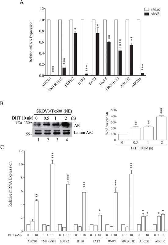 AR activity regulates target txr genes.