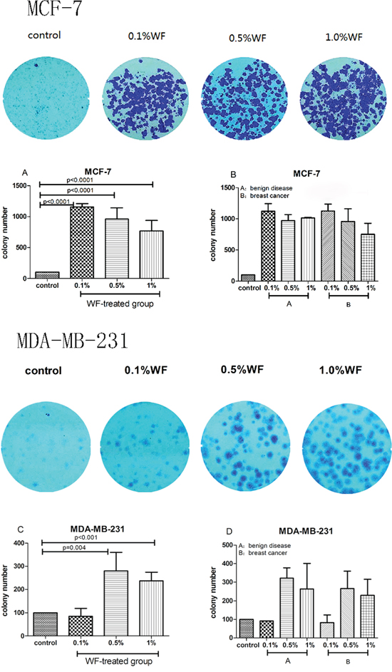 Colony formation assays: WF promotes MCF-7 and MDA-MB-231 cell growth.