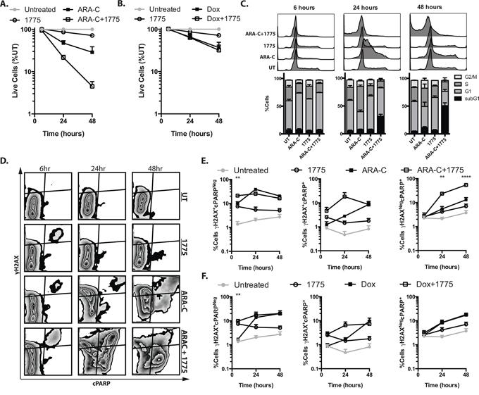 AZD1775 promotes DNA damage and apoptosis with cytarabine but not doxorubicin.