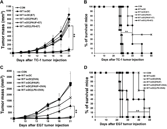 PAUF mediated DC vaccine has a significant tumor treatment effect.