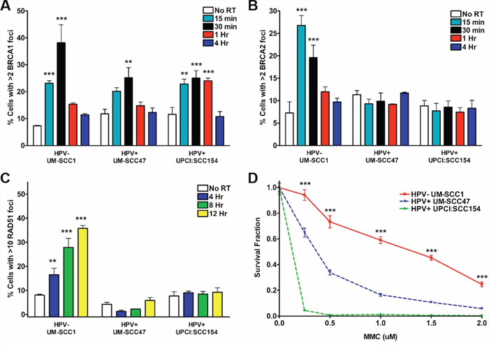 HPV+ HNSCCs display defects in HR repair signaling.