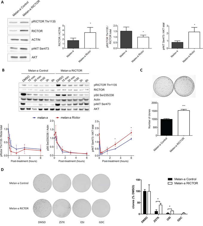 RICTOR controls the PI3K pathway in melanocytes.