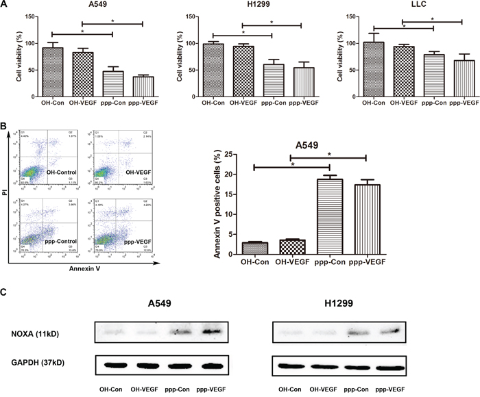 ppp-VEGF induces apoptosis in NSCLC cells.