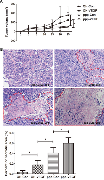 ppp-VEGF inhibits tumor growth and significantly promotes tumor necrosis.