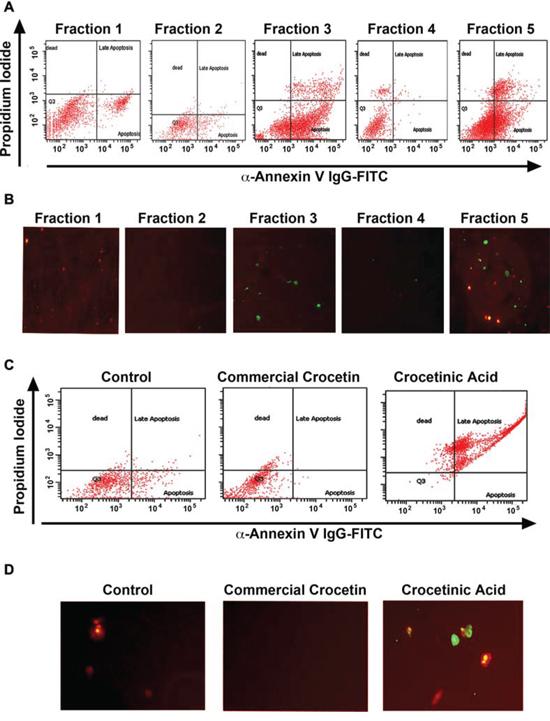 Crocetinic acid induces apoptosis.