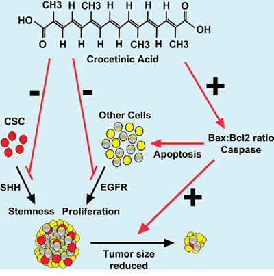 Schematic representation of mechanism by which crocetinic acid inhibits tumor growth.