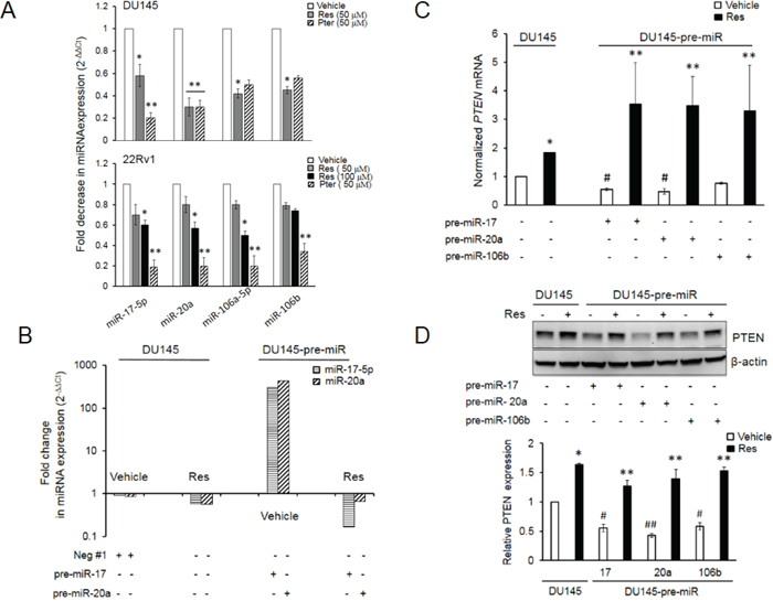 Resveratrol and pterostilbene reversal of miR-mediated downregulation of PTEN mRNA and protein.