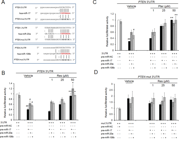 Resveratrol and pterostilbene rescue PTEN inhibition by oncomiRs -17, -20a and -106b.