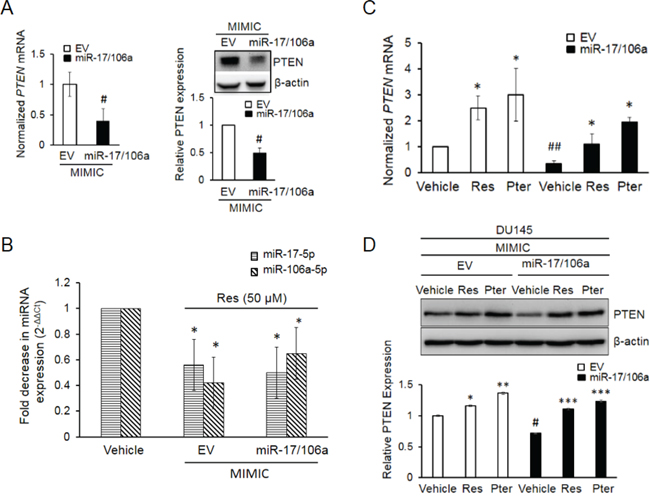 Establishment and characterization of DU145 cells stably overexpressing miR-17/106a.